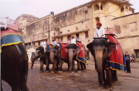 Painted elephants in Rajasthan