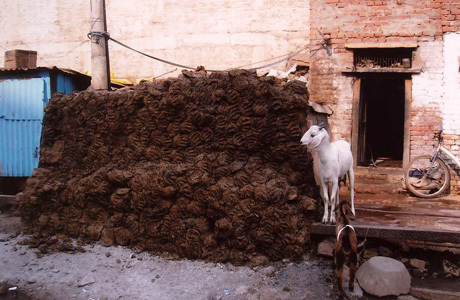 Goat dung fuel for sale